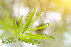 Branches of bamboo leaf as a mind map concept Royalty Free Stock Images