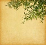 Branches of a bamboo Royalty Free Stock Images