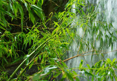 Branches of bamboo in the spray of the waterfall Royalty Free Stock Images