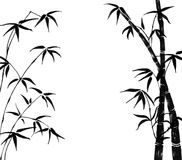 Branches of a bamboo on a white background Royalty Free Stock Photo