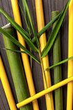 Branches of bamboo wood. Branches of yellow and green bamboo wood from above. Natural background royalty free stock images