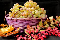 Branches of barberry and grapes in a basket Stock Photo