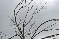 BRANCHES OF BARREN TREE AGAINST GREY SKY. Dry barren tree under cloudy sky Royalty Free Stock Photo