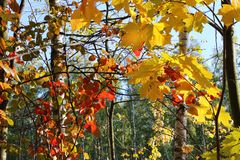 Branches of beautiful autumn trees Stock Photo