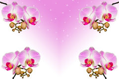 Branches of beautiful violet orchids on gradient Royalty Free Stock Images