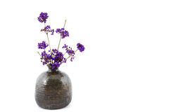 Branches of beautyberry bush in a vase Royalty Free Stock Image