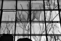 branches befläckt exponeringsglas Arkivfoton