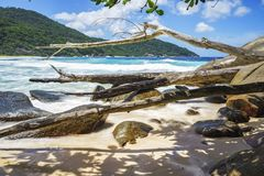 Branches and granite rocks at wild tropical beach,police bay,sey. Branches and big granite rocks at wild tropical beach,police bay, mahé, seychelles Stock Image