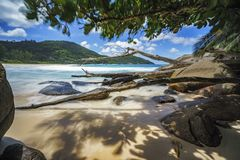 Branches and granite rocks at wild tropical beach,police bay,sey. Branches and big granite rocks at wild tropical beach,police bay, mahé, seychelles Royalty Free Stock Images