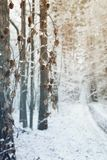Branches of a birch tree covered with hoarfrost. Road in the snowy forest. Winter natural background Royalty Free Stock Images