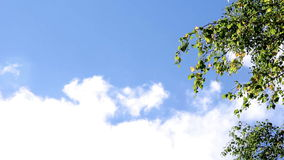 Branches of birch trees. Sky. Clouds stock video