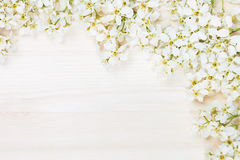 Branches of bird cherry on a light wooden board. Border. Copy space. Floral background. Wooden background. Royalty Free Stock Image