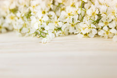 Branches of bird cherry on a light wooden board. Border. Copy space. Floral background. Wooden background. Royalty Free Stock Images