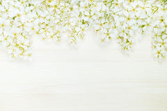 Branches of bird cherry on a light wooden board. Border. Copy space. Floral background. Wooden background. Stock Images