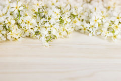Branches of bird cherry on a light wooden board. Border. Copy space. Floral background. Wooden background. Royalty Free Stock Photo