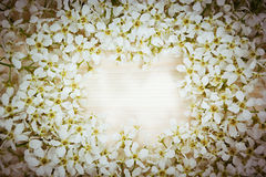 Branches of bird cherry on a light wooden board. Frame. Copy space.  Wooden background. Royalty Free Stock Photo