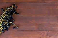 Branches of bird cherry Royalty Free Stock Photos