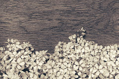 Branches of bird cherry on a  wooden board. Border. Copy space. Black and white , sepia background. Vintage wood background. Royalty Free Stock Photos