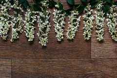 Branches of bird cherry on a  wooden board. Border. Copy space. Vintage wood background. Royalty Free Stock Photo
