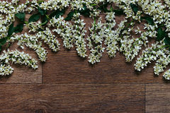 Branches of bird cherry on a  wooden board. Border. Copy space. Vintage wood background. Stock Photo