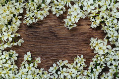Branches of bird cherry on a  wooden board. Frame. Copy space. Vintage wood background. Stock Images