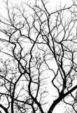Branches in black on white Royalty Free Stock Images