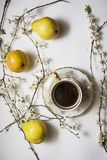 Branches bloom with cup of coffee Stock Images