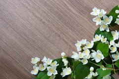 Branches blooming jasmine on a wooden background. Stock Photo