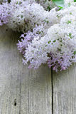 Branches of blooming lilacs on wooden background Royalty Free Stock Image