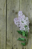 Branches of blooming lilacs on wooden background Royalty Free Stock Photo