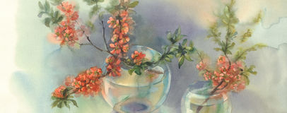 Branches of blooming quince still-life watercolor. Branches of Japanese blooming quince. Watercolor illustration. Red flower still-life Royalty Free Stock Photos