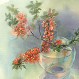 Branches of blooming quince still-life watercolor. Branches of Japanese blooming quince. Watercolor illustration. Red flower still-life Stock Photography