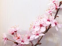 Branches of blossom Plums on a wooden table stock photography