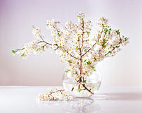 Branches of a blossoming apple tree in a glass vase with water. Beautiful branches of a blossoming apple tree in a glass vase with water Stock Photos