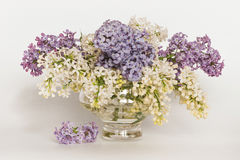 Branches of a blossoming lilac in a glass vase on a white backgr Royalty Free Stock Images