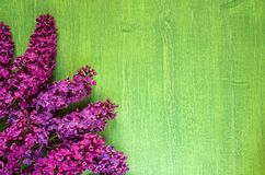 Lilac flowers on green wooden background, copy space, diagonal. Branches of blossoming lilac on green wooden background, diagonal arrangement, copy space royalty free stock photo