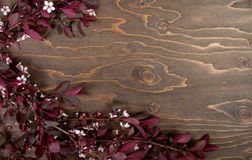 Branches and blossoms on wooden background Stock Image
