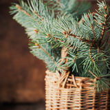 Branches of Blue Fir Tree in a Rustic Basket on Wooden Background Stock Photo