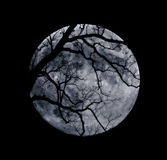 Branches and a Blue Moon. Tree branch silhouettes in front of a bright full blue moon Stock Images