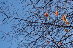 Branches Royalty Free Stock Photo