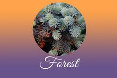 Branches of blue spruce. Seasonal concept background badge website banner template geometric figure colorful vintage design trendy wallpaper texture beautiful Royalty Free Stock Image