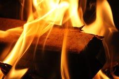 Branches brûlantes Photos stock