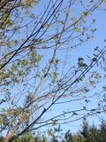 Branches Royalty Free Stock Photography