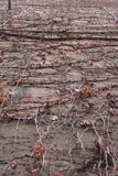 Branches. On a building in Venice, Italy Royalty Free Stock Photo