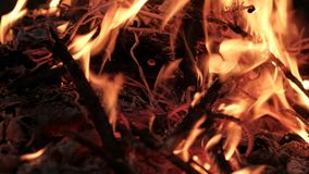 Branches burn in the fire. stock video