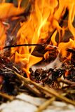 Branches burning Royalty Free Stock Image