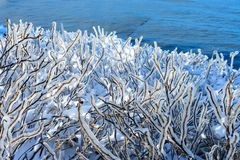 Branches of a bush covered with ice. Ice storm royalty free stock photos