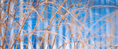 Branches of the bushes on a blue backgr Stock Images