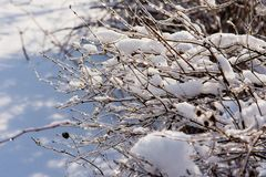 Branches of bushes under the ice stock photo