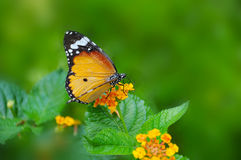 Branches butterfly habitat royalty free stock photos